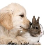 rabbit & golden retriver.jpg