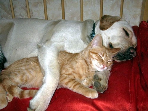sleep cat and dog.jpg