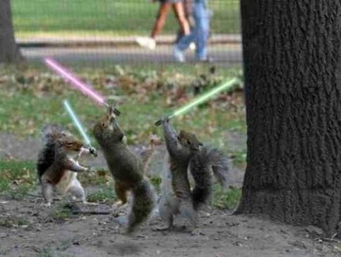 Squirrels star wars.jpg