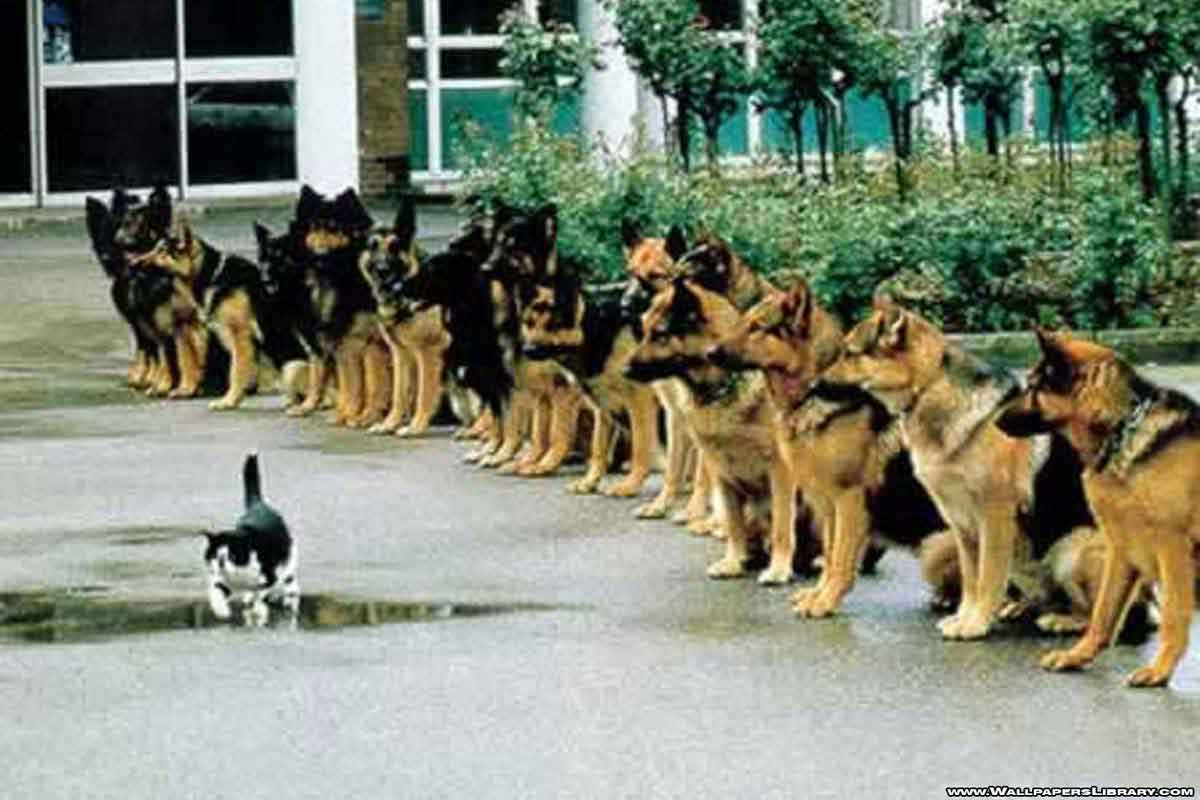 cat and police dogs.jpg