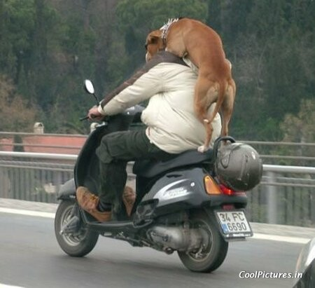 dog on bike.jpg