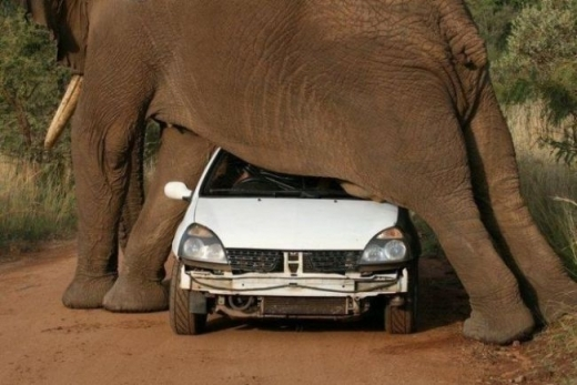 elephant car 2.png