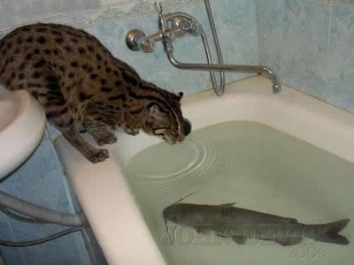Cat and fish 2.jpg