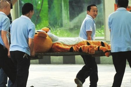 china-chengdu-zoo-escaped-tiger-drill-tigger-10.jpg