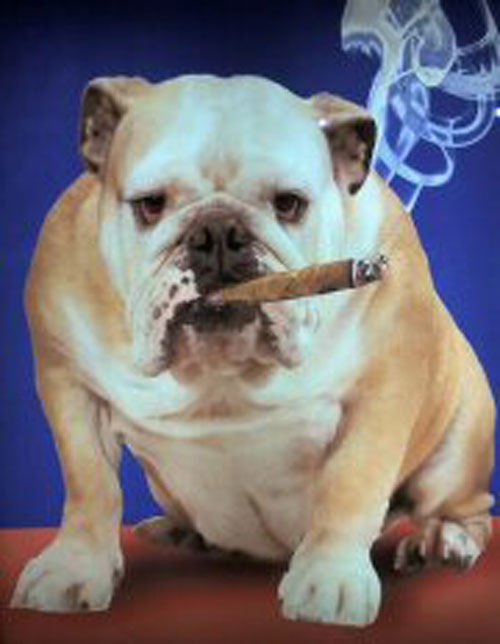 dog smoking 1.jpg