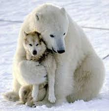 hugging polar bear dog 1.png