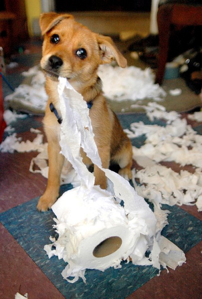 dog toilet paper 2-400.png