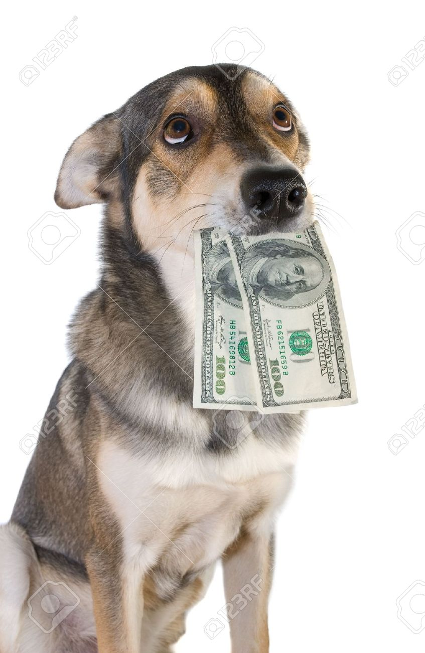dog money 1.jpg